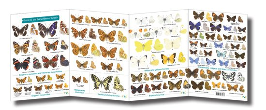FSC-butterflies-of-britain