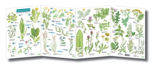 FSC-playing-field-plants