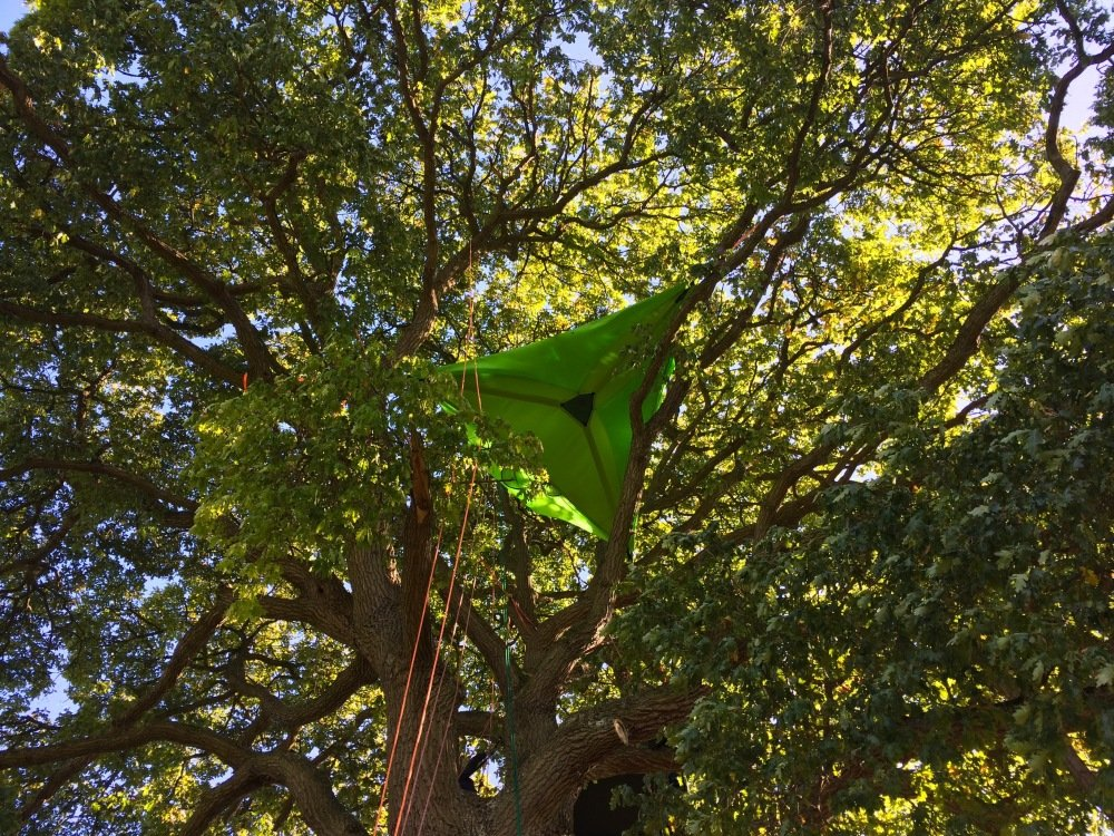 Tentsile 14 meters up a tree