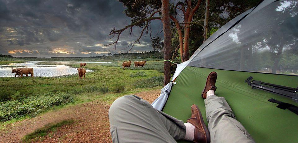 Tentsile Stingray Unique Tree Tent Cows