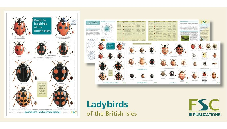 FSC Fold-Out ID Chart - Ladybirds Identification Chart
