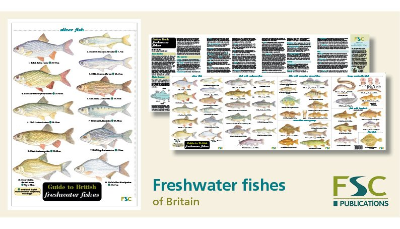 FSC Fold-Out ID Chart - Freshwater Fish Identification Chart