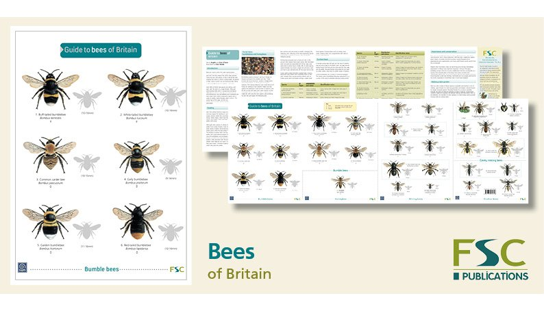 FSC Fold-Out ID Chart - Bees Identification Guide