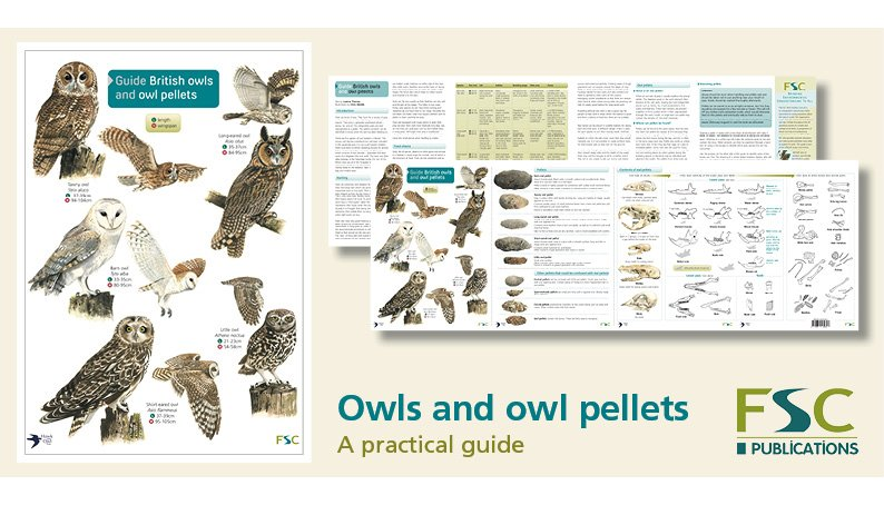 FSC Fold-Out ID Chart - Owls and Owl Pellets Guide