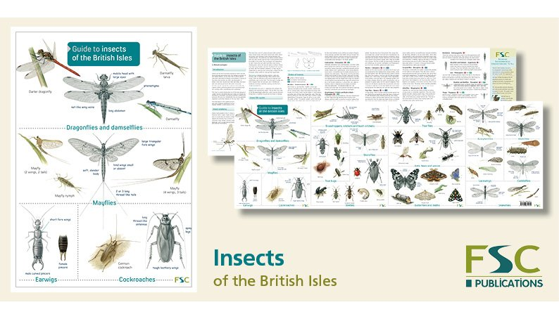 FSC Fold-Out ID Chart - Insects of the British Isles Identification Guide