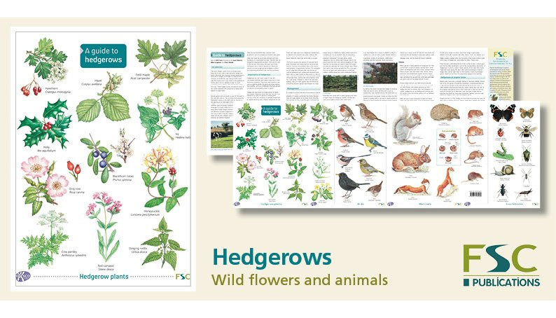 FSC Fold-Out ID Chart - Hedgerows Guide