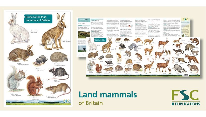 Land Mammals Identification Chart