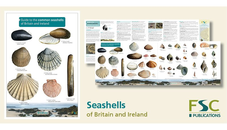 FSC Fold-Out ID Chart - Seashells Identification Chart
