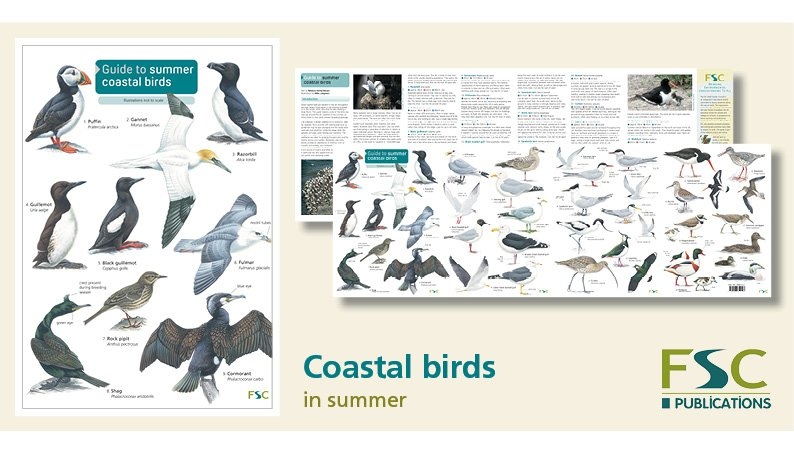 FSC Fold-Out ID Chart - Summer Coastal Birds Chart