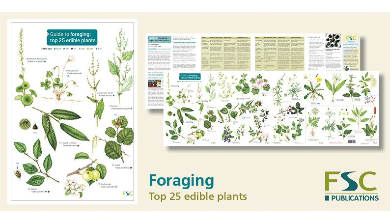 FSC Fold-Out ID Chart - Foraging Chart