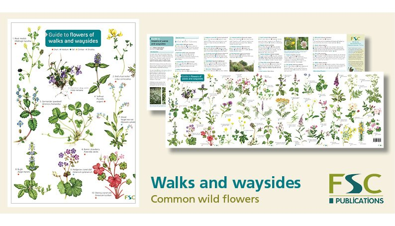 FSC Fold-Out ID Chart - Flowers of walks and waysides