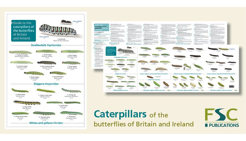 FSC Fold-Out ID Chart - Caterpillars Identification Chart