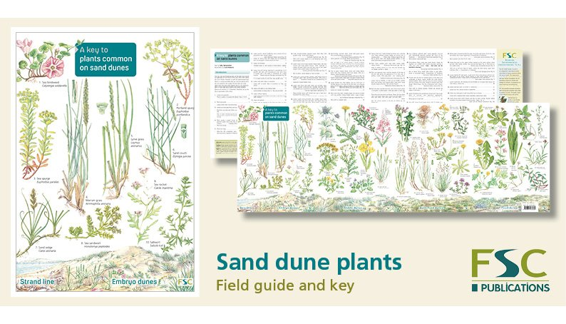 FSC Fold-Out ID Chart - Sand Dune Plants Identification Chart