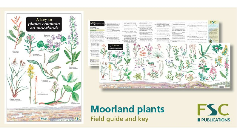 FSC Fold-Out ID Chart - Moorland Plants Identification Chart