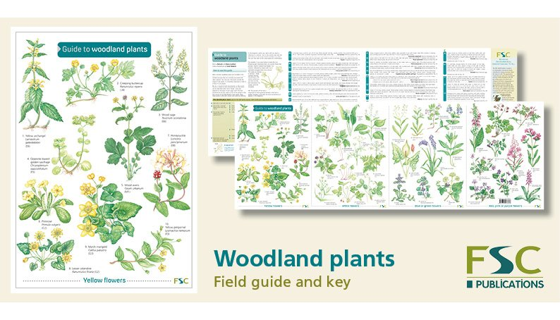 FSC Fold-Out ID Chart - Woodland Plants Identification Chart