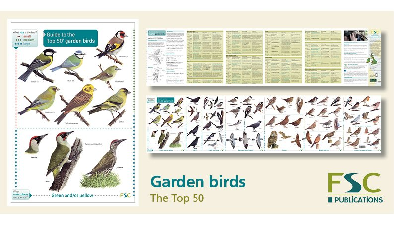 FSC Fold-Out ID Chart - Top 50 Garden Birds Chart