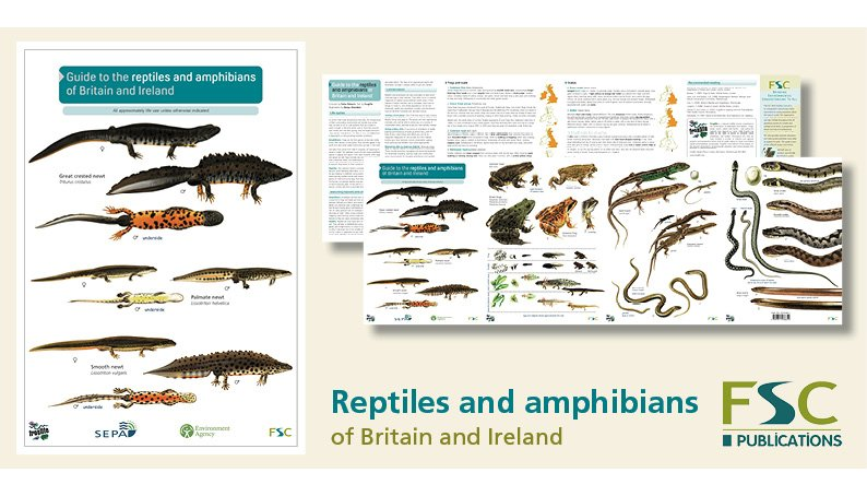 FSC Fold-Out ID Chart - Reptiles and Amphibians Identification Chart