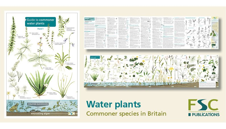 FSC Fold-Out ID Chart - Water Plants Identification Chart
