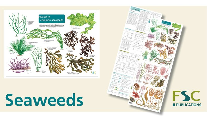FSC Fold-Out ID Chart - Seaweeds Identification Chart