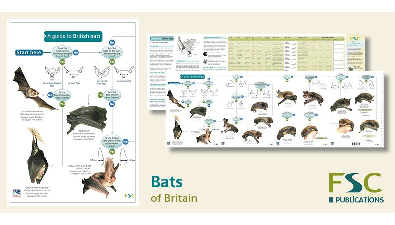 FSC Fold-Out ID Chart - Bats Identification Guide