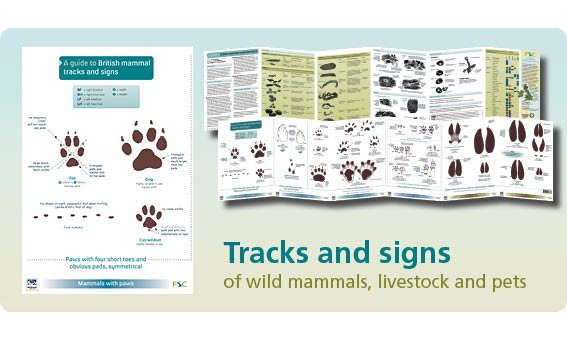 FSC Fold-Out ID Chart - Mammal Tracks and Signs Chart