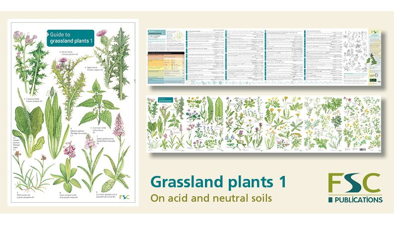 FSC Fold-Out ID Chart - Grassland Plants 1 Identification Guide