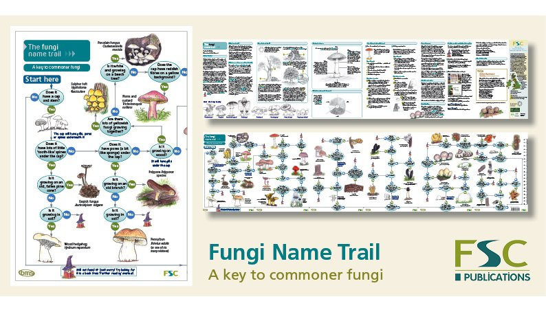 FSC Fold-Out ID Chart - Fungi Identification Chart