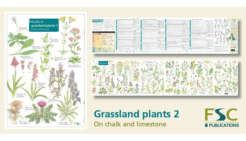 FSC Fold-Out ID Chart - Grassland Plants 2 Identification Guide